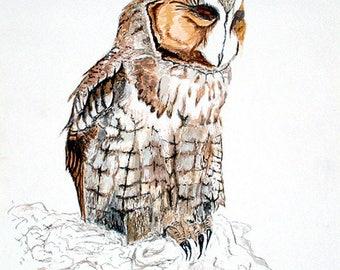 A wildlife Giclee print of a 'Long Eared Owl'