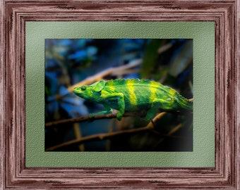 Poster Print - Animal photography - Iguana