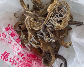 Digital Download IMAGE of Dried Seahorses used in Traditional Chinese Medicine (TCM) - Photo Stock. (DDLSP))