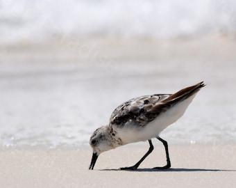 Sanderling Photograph // Beach Bird Print // Shorebird Picture // Beach Print