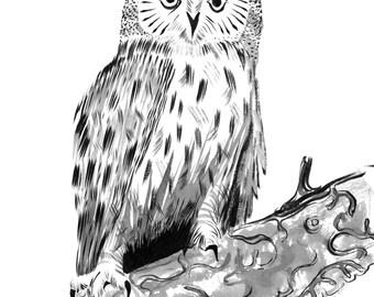"""Long-Eared Owl - 9 x 12"""" Original Painting, Waterproof Ink on Watercolor Paper."""