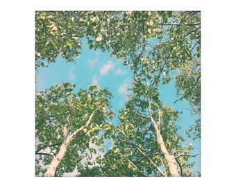 Birch Tree art, Retro Tree Photography Print, Forest Canopy Art, Fine Art Print, Peaceful Art Birch Life 8x8 10x10 12x12 Wall Art