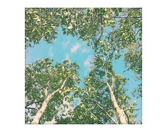 Birch Tree art, Retro Tree Photography Print, Forest Canopy Art, Fine Art Print, Peaceful Art Birch Life 8x8 10x10 12x12 Wall Art