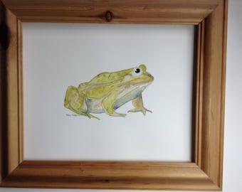 Watercolour of frog. Original.