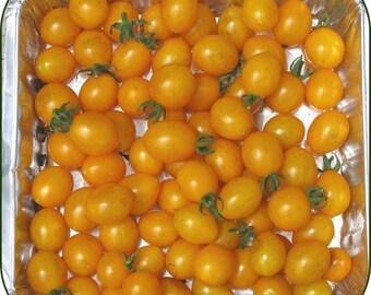 Tomato Plant, Cherry, Blondkopfchen Heirloom Organic