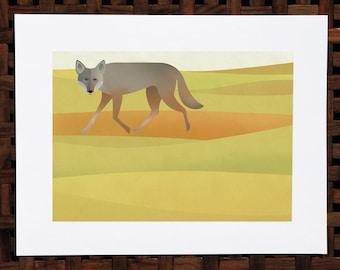 Coyote in the golden hills