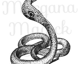 COBRA SNAKE Viper  Royalty Free Clip Art Illustration  Digital Image Download Printable Graphic Clip Art Transfers Prints HQ 300dpi jpg png