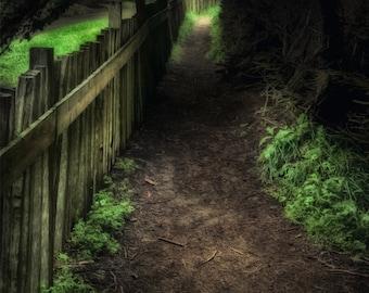 Down the Path. Photographic print 8x10, 11x14
