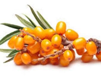 Sea Buckthorn berry oil unrefined organic, Free shipping
