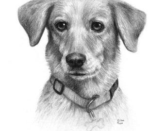 Dog Portrait Drawing, Dog Drawing Custom, Custom Pet Drawing, Drawing Of Dog, Dog Lover Gift, Charcoal Drawing, Pet Memorial, Pet Portrait