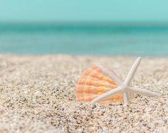 Seashell Photography, beach photography, turquoise, tan, orange,  seashell print, coastal wall art, bathroom decor, starfish photo