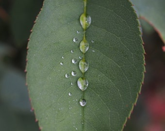 Rain drops on a leaf