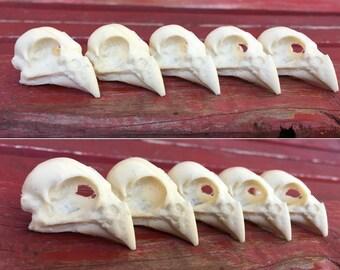Cardinal Skull Replica