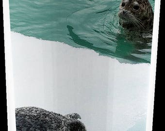 Momma and Baby Harbor Seals Travel Tumbler