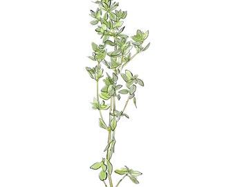 thyme, thyme digital print, herb print, downloadable kitchen art, JPEG