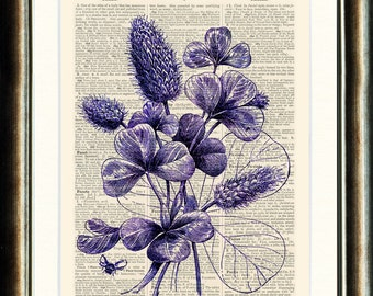 Clover - Choice of Colours Upcycled vintage image printed on a late 1800s Dictionary page Buy 3 get 1 FREE