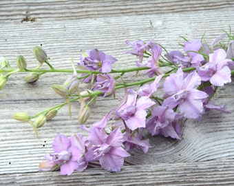 Larkspur Seed, Purple Larkspur, Pale Lavender Larkspur Earl Grey Larkspur Seeds, Heirloom Seeds, Cottage Garden Flowers, Annual Larkspur