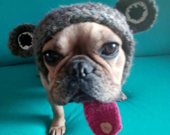 Frog hat for a French bulldog