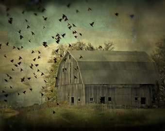farmland photography barn birds fine art photography nature photography flock migration home decor