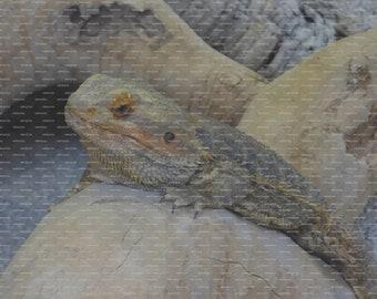 "6"" x 8"" Exercise Book Using Original Image of a Reptile"