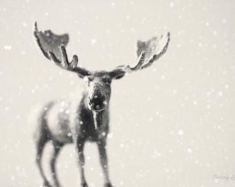 winter moose, snow, fine art photography