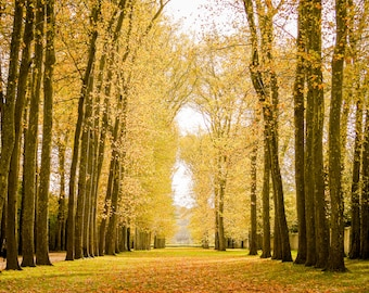 Fall in Versailles photograph, fine art Paris photography, travel photo, golden autumn colors