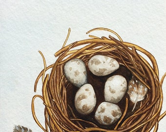 Bird's Nest Original Watercolour Painting
