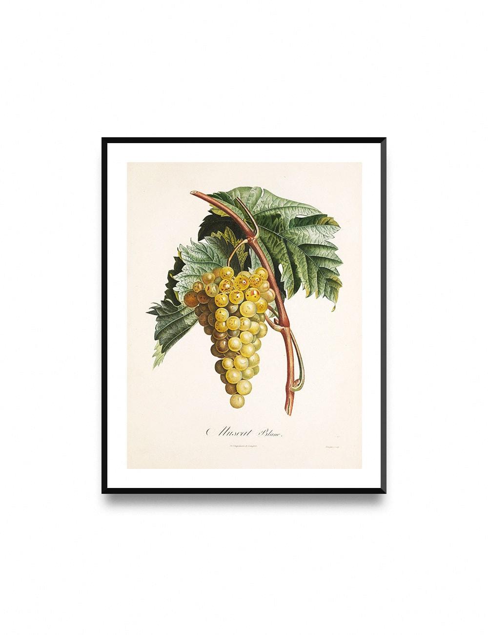 Grapes wall print kitchen decor printable fruit art grapes