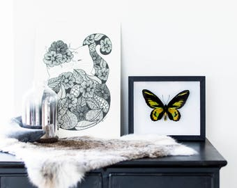 Real framed butterfly: Ornithoptera rotshildi // RARE // birdwing butterfly