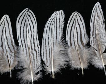 set of 6 natural silver pheasant feathers