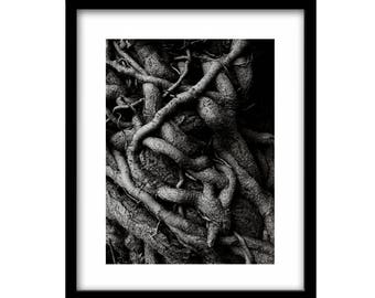 tree picture,  tree photography, black and white photography, black and white landscape photography, black and white tree photography