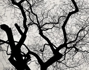 Trees Black and White photography Home decor Nature