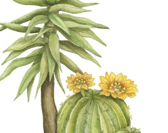 Barrel Cactus and Yucca Signed Archival Watercolor Print