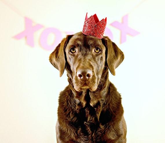 Dog Birthday Hat    February Birthday    Dog Birthday    Birthday Crown Glitter Red    Pet Portrait