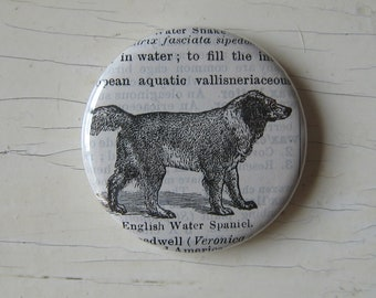 English Water Spaniel Vintage Dictionary Illustration Magnet