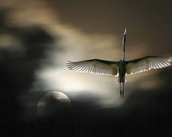 Egret at night with moon