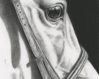 Horse Charcoal Drawing Giclee Print, Horse Art, Horse Eye, Tack Drawing, White Horse Sketch, Equine Art, Bridle, Charcoal Sketch