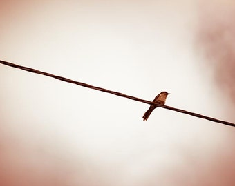 birds on a wire photography nature sparrow bird on powerline 8x10 fall photography print golden autumn brown cream bedroom decor nursery