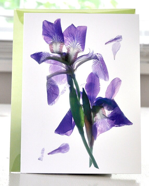 Handmade Card Floral Note Card Greeting Card Todd's Pond Iris Too Blue Purple