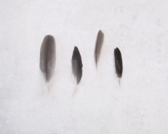 Vier Federn Hampel 8 x 10 Foto. Naturgeschichte.
