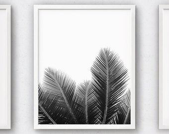 Black and White Prints, Palm Leaves, Tree Leaf Art, Art Wall Print, Plant Photography, Botany Photo, Natural Artwork, Frond Poster, Modern