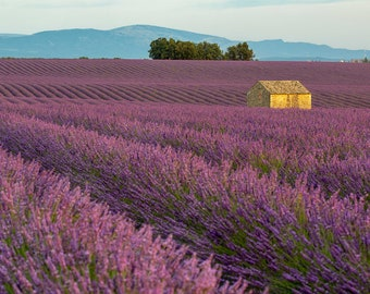 Aix en Provence Lavender Fields, South of France Colorful, Art Decor in Provence, French Country Decor, French Countryside Purple, Lavender