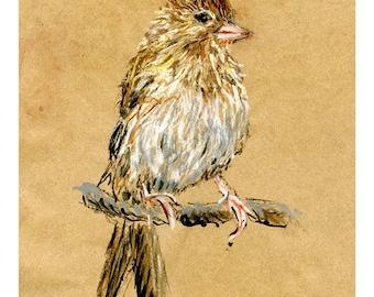 5x7 print Sparrow - bird art mixed media drawing