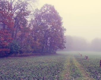 Herfst mist