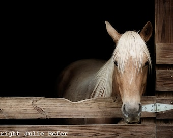 Horse Photography Rustic Country Decor
