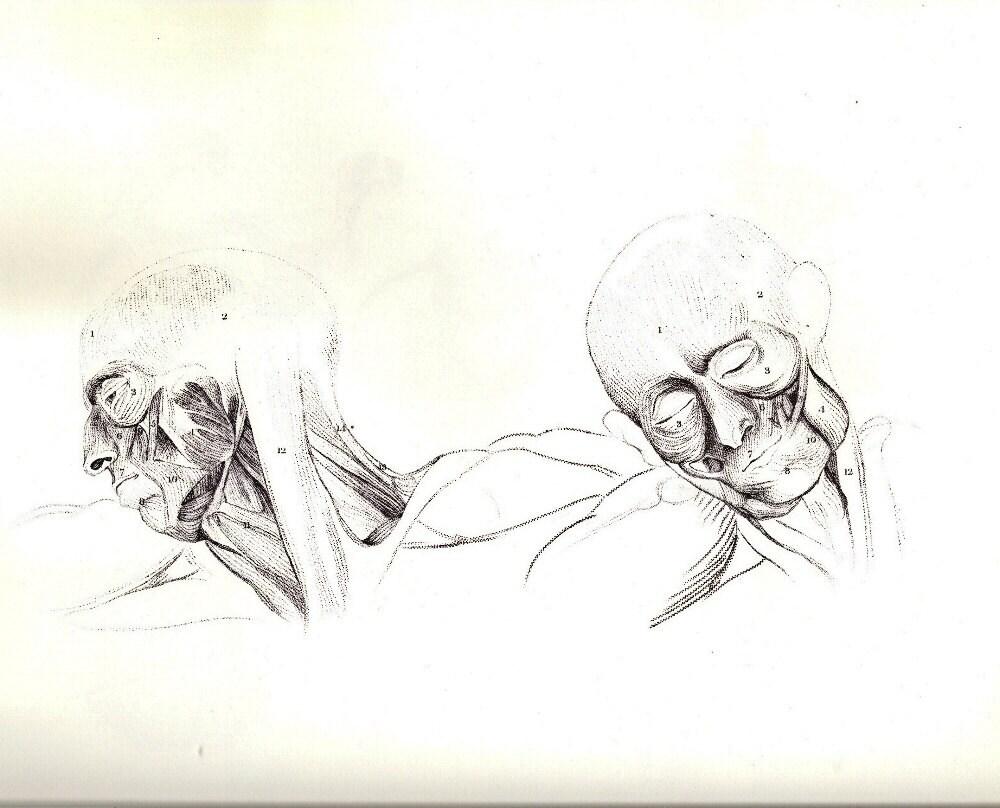 Anatomía humana cabeza y cuello músculos o huesos de la caja