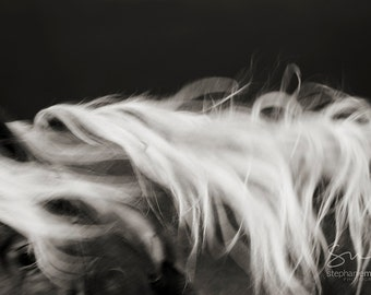 Abstract Horse Print, Black and White Horse Photography, Fine Art Horse Photography, Horse Print, Horse Picture, Horse Poster,