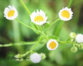Yellow Wildflower, White Wildflower, Stilesville, Indiana, Fine Art Print, Nature Photography, 8 x 10, Woodland, Glitter, Rural, Spring