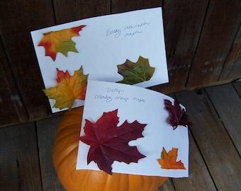 Two Fall Leaf Samples
