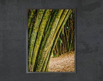 Giant Green Bamboo Forest in Kericho, Kenya Printable Photo Wall Art Digital Download